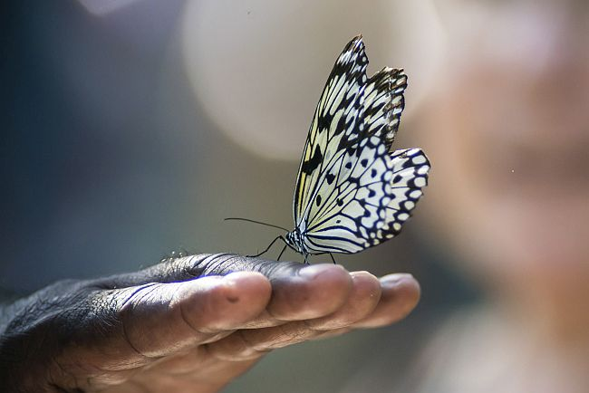 butterfly sitting on man's hand