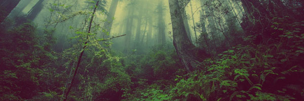 Lush green trees and forest floor